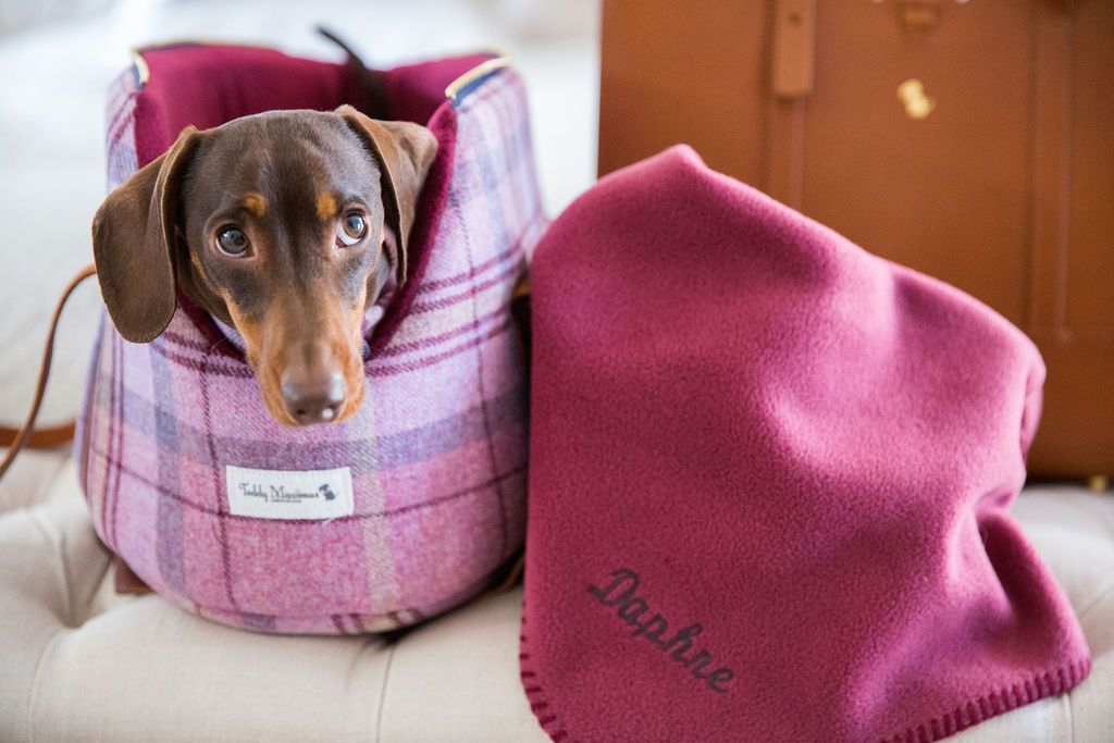 Pink Shetland Wool Collection for super chic dogs and fashionable dog mums