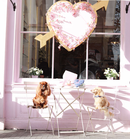 Top Valentines Day Gifts for your Dog