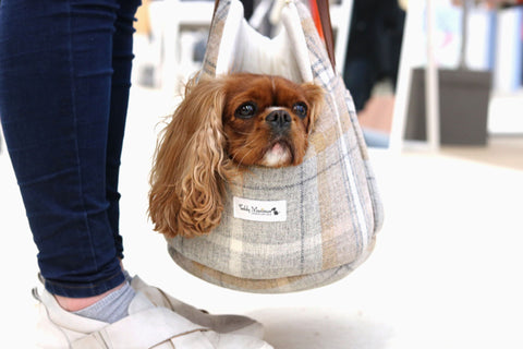 Teddy Maximus Pet Carrier