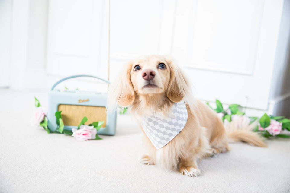 Stylish neckerchiefs for dogs who love to look fashionable. Personalise with your dog's name too!