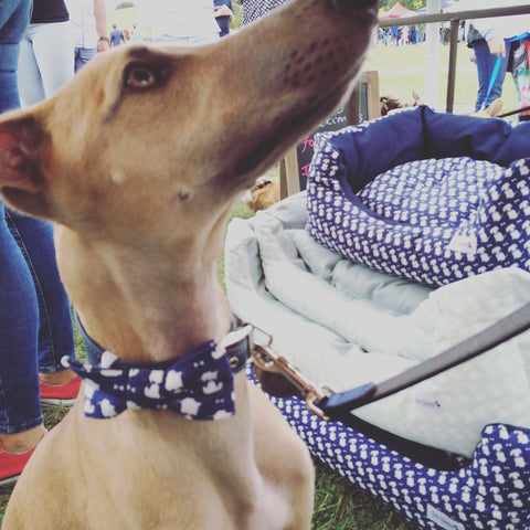 dog bow tie for Whippet