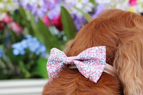 Teddy Maximus dog bow tie