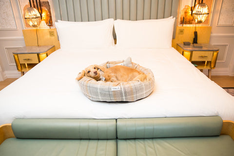 Dog Friendly Vacation at the Mandarin Oriental London
