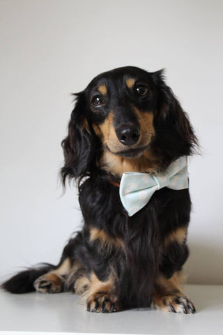Sev wears Teddy Maximus Bow Tie