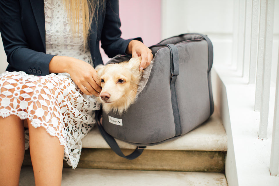Luxury Dog Carrier Grey Velvet by Teddy Maximus