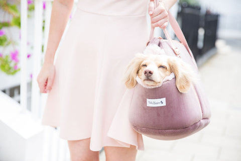 Luxury Pink velvet dog carrier with Teddy the Dachshund