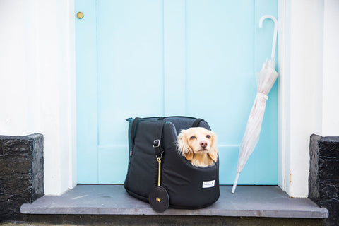 The Adventurer Waterproof Dog Carrier by Teddy Maximus