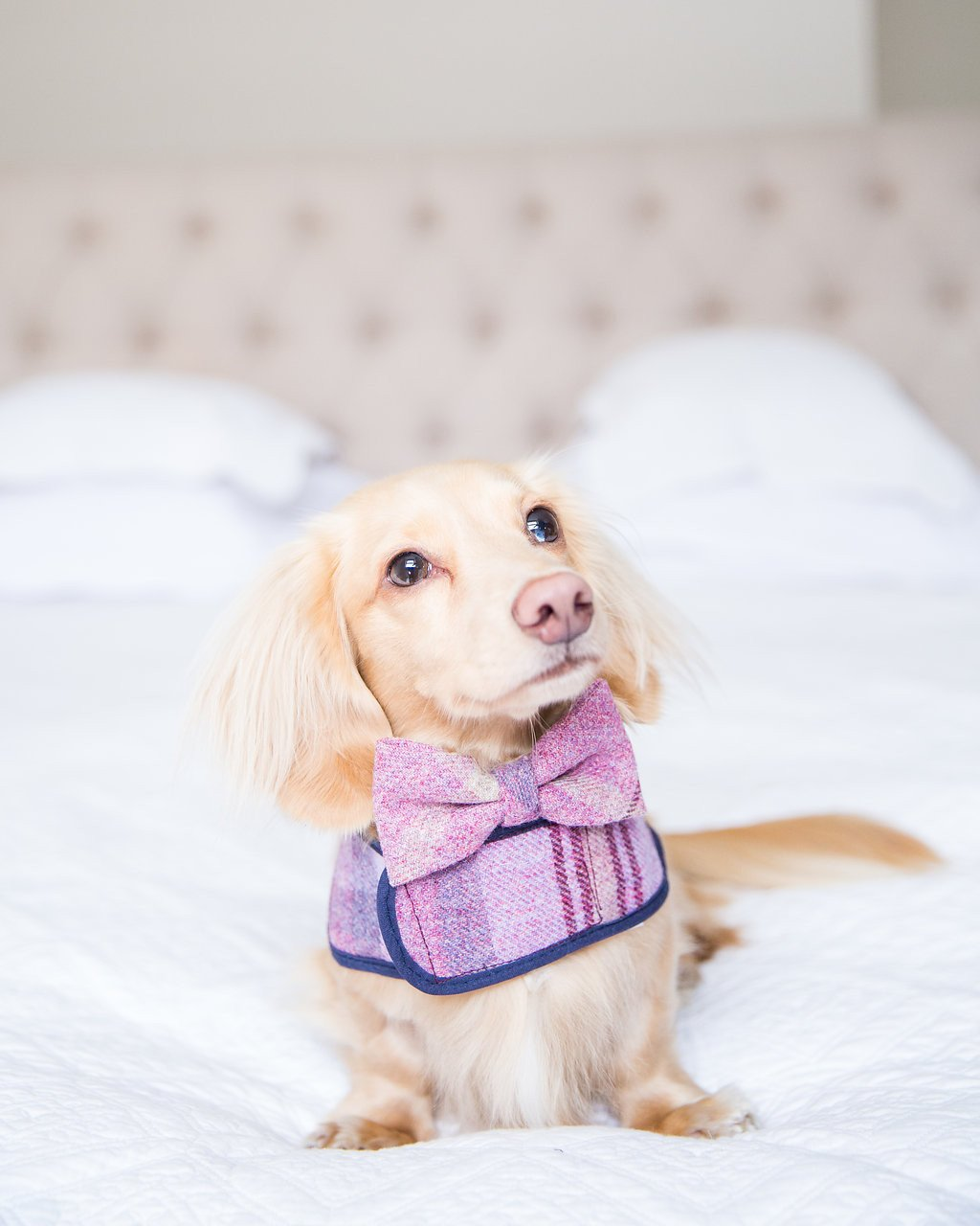 Dog Bow Ties & Neckerchiefs