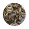 Sarah_Senior_Loose_Curl_Wig_number_10t/22_Medium_brown_hinted_mix_ash_blonde_highlights_idanceirish_jpeg