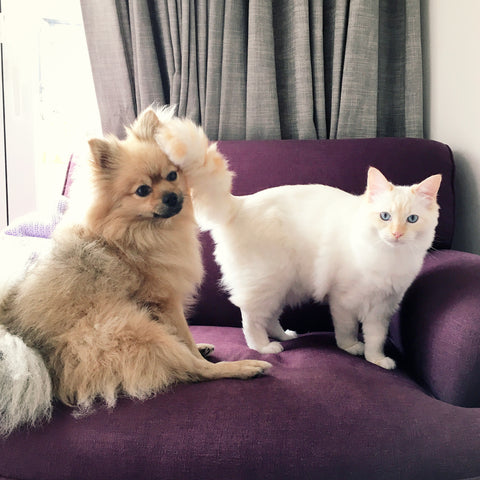 Pearlberry Jewellery Fur Babies Zeus the Pom and Aphie the Raggie