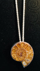Ammonite pendant in sterling silver on sterling silver wheat chain