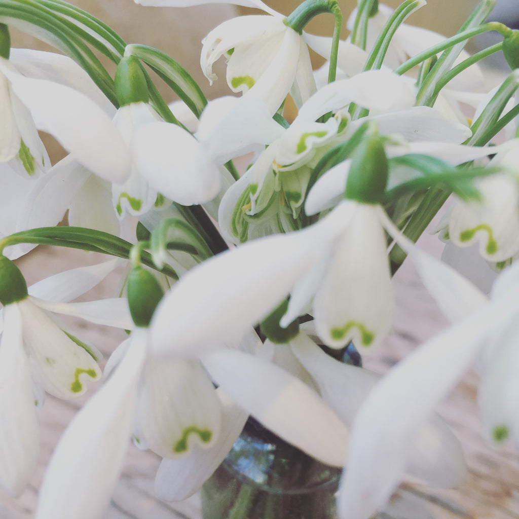 flowers-snowdrops-mothers-celebrate