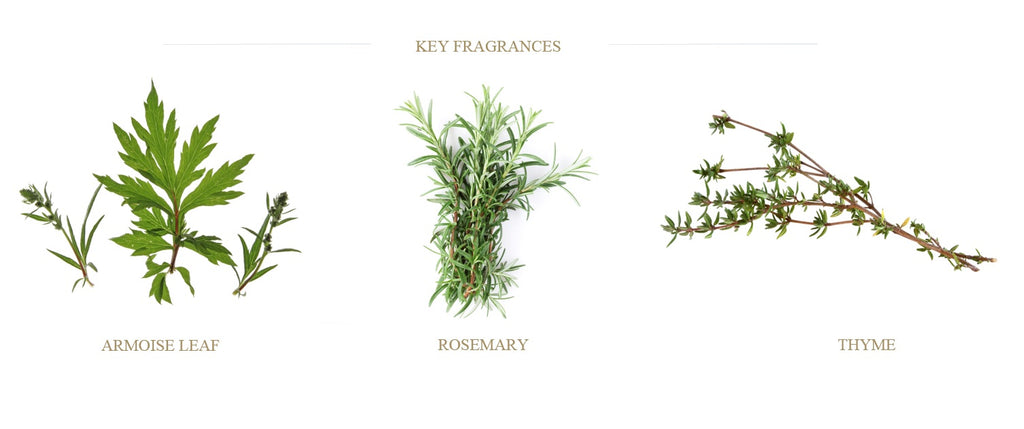 rosemary-thyme-fougere-armoise-candles