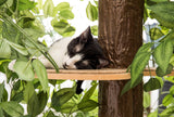 CatHaven™ Two Tier Medium Cat Tree - SPECIAL PRICE!