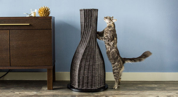 Calypso Cat Scratcher - NEW!!!