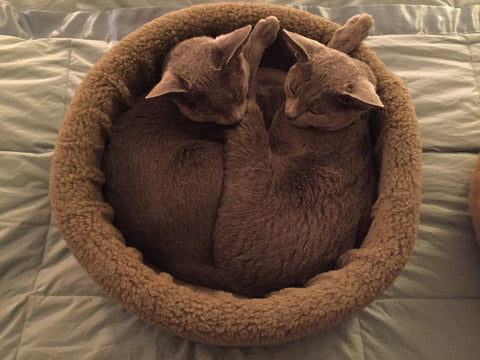 """WOOLIES"" Cat Fleece Beds -Click to see several more designs"