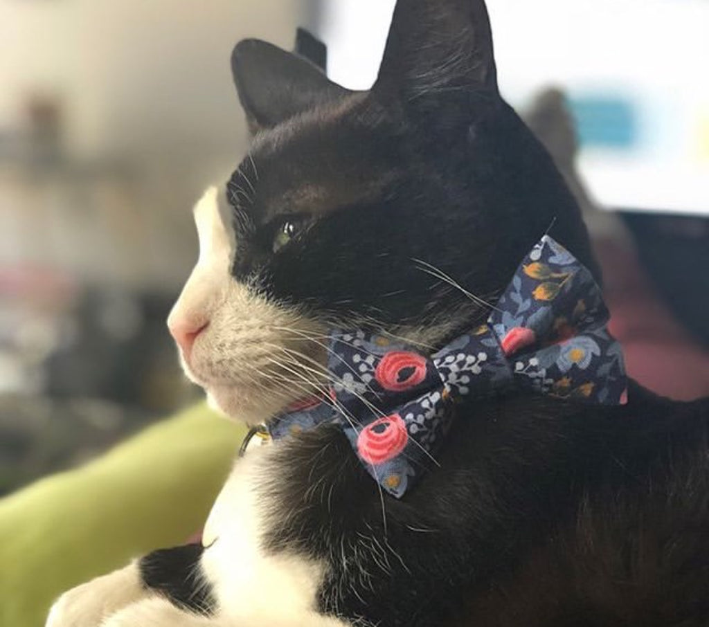 Wunderland Cat Collar and Matching Bow Tie Set - NEW!!!