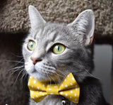 Always Sunny in Pickledelphia Cat Collar & Matching Bow Set - NEW!!!