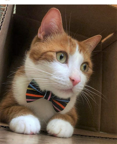Endless Summer Cat Collar and Matching Bow Tie Set - NEW!!!