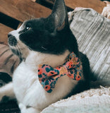 Catchella Cat Collar and Matching Bow Tie Set - NEW!!!