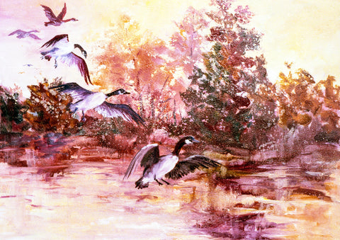 "Greeting Card - ""Canadian Geese Landing"""
