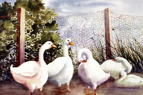 "Canvas Print - ""Fenced In Quackers"" 12x18"
