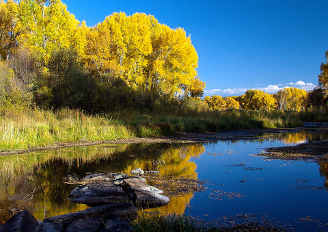"Photo Card - ""Gunnison River"""