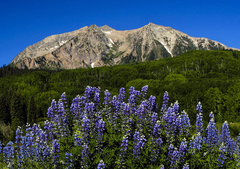 "Photo Card - ""Kebler Pass Lupines"""
