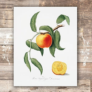 Vintage Fruit Art Prints - Kitchen Botanical Prints - (Set of 6) - Unframed - 8x10s