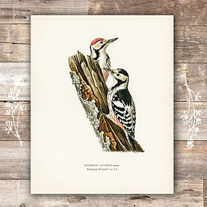 Vintage Bird Art Prints - (Set of 6) - Unframed - 8x10s | Bird Wall Decor