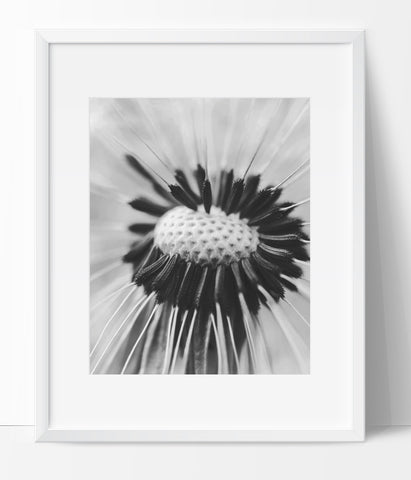 Dandelion Flower Art Photography, Black and White Modern Art, Prints - Ink Print Art