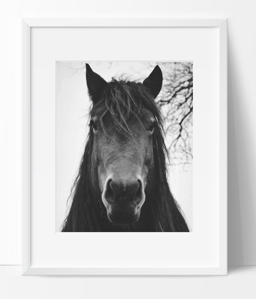 Horse Wall Art Photography, Black and White Modern Art, Prints – Ink ...