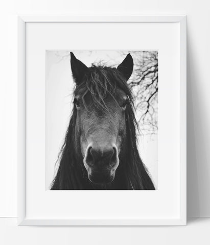 Horse Wall Art Photography, Black and White Modern Art, Prints - Ink Print Art
