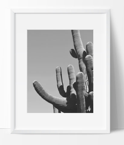 Cactus Art Photography, Black and White Modern Art, Prints - Ink Print Art