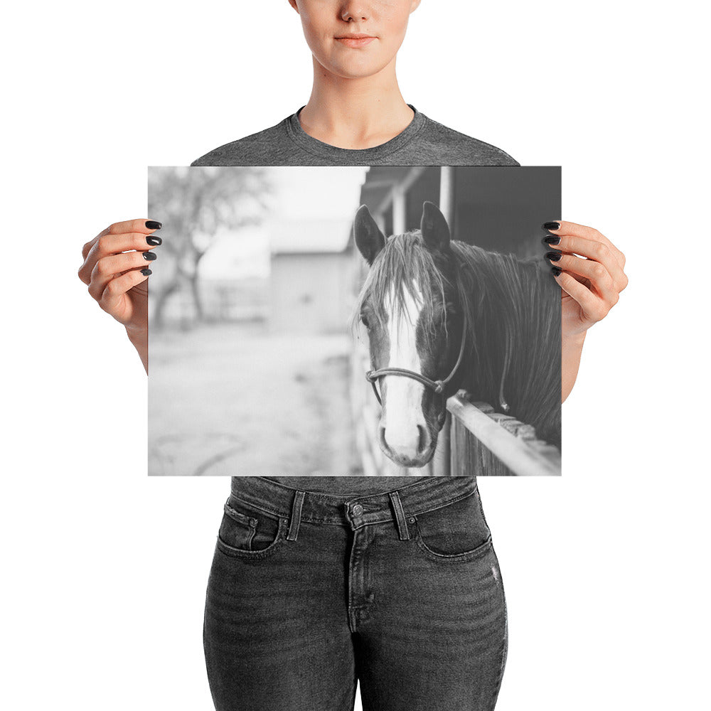 The Modern Sentiment Horse Poster