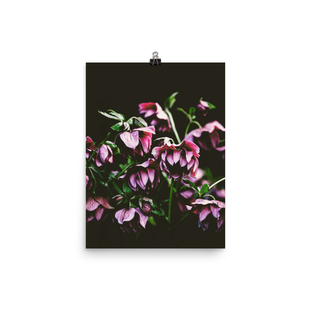 Botanical Poster Wall Art