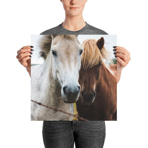 Friendly Horses Greet Color Poster