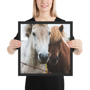 Friendly Horses Greet Framed photo paper poster