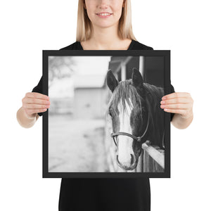 The Modern Sentiment Horse Framed Photo Paper Wall Art