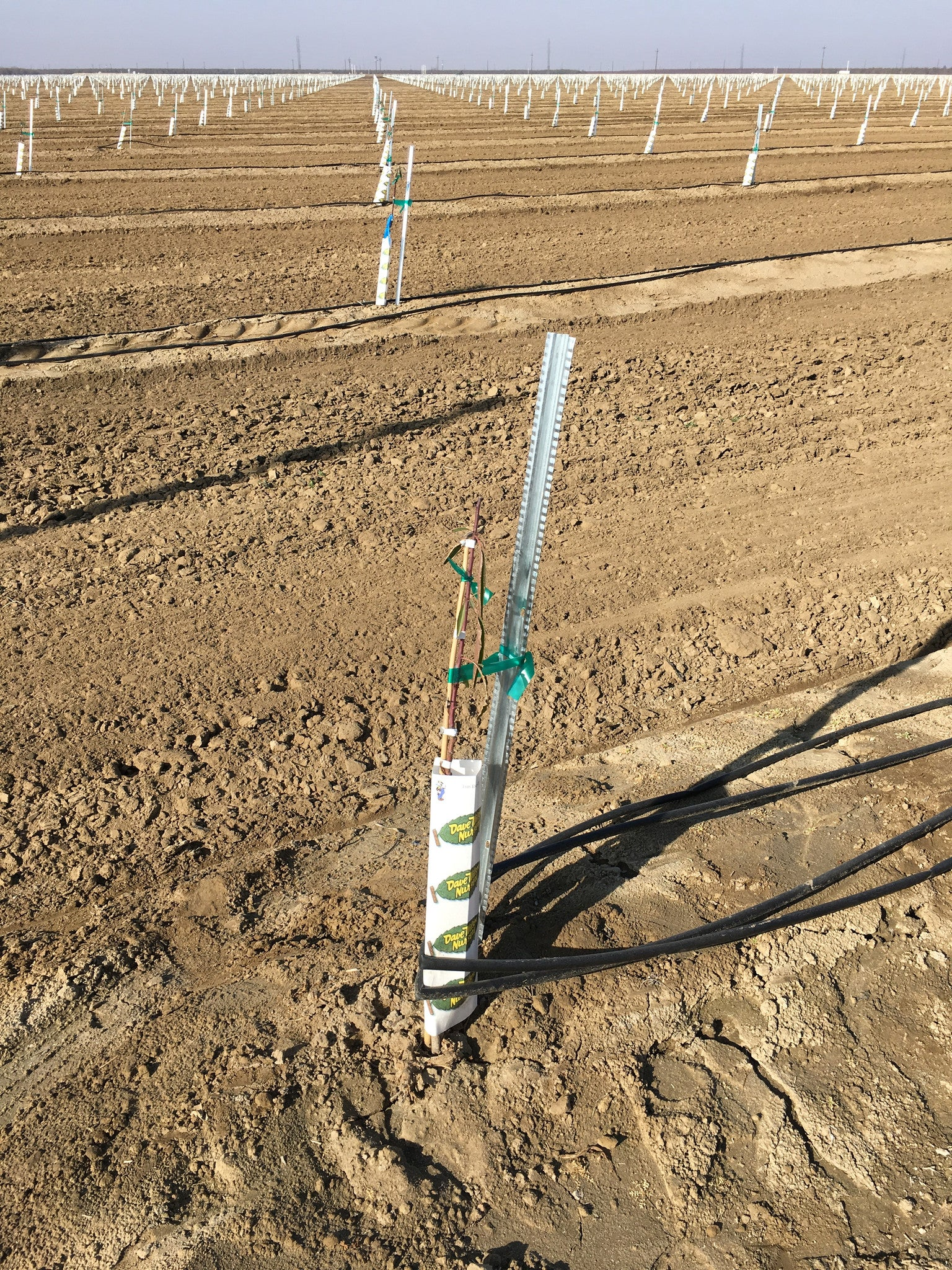 2.71 Stake used in an Almond Orchard