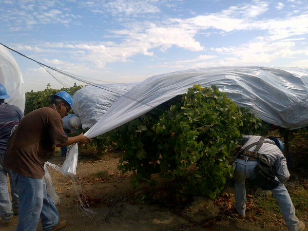 Installing vine film in the field