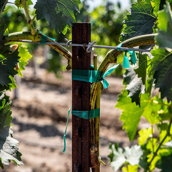 tpost in a vineyard during the growing process
