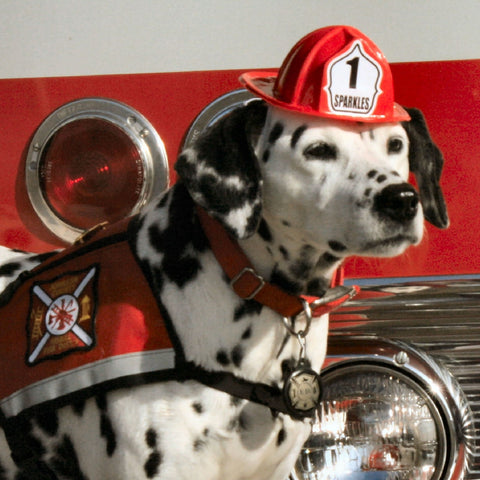 Fire Dog Sparkles