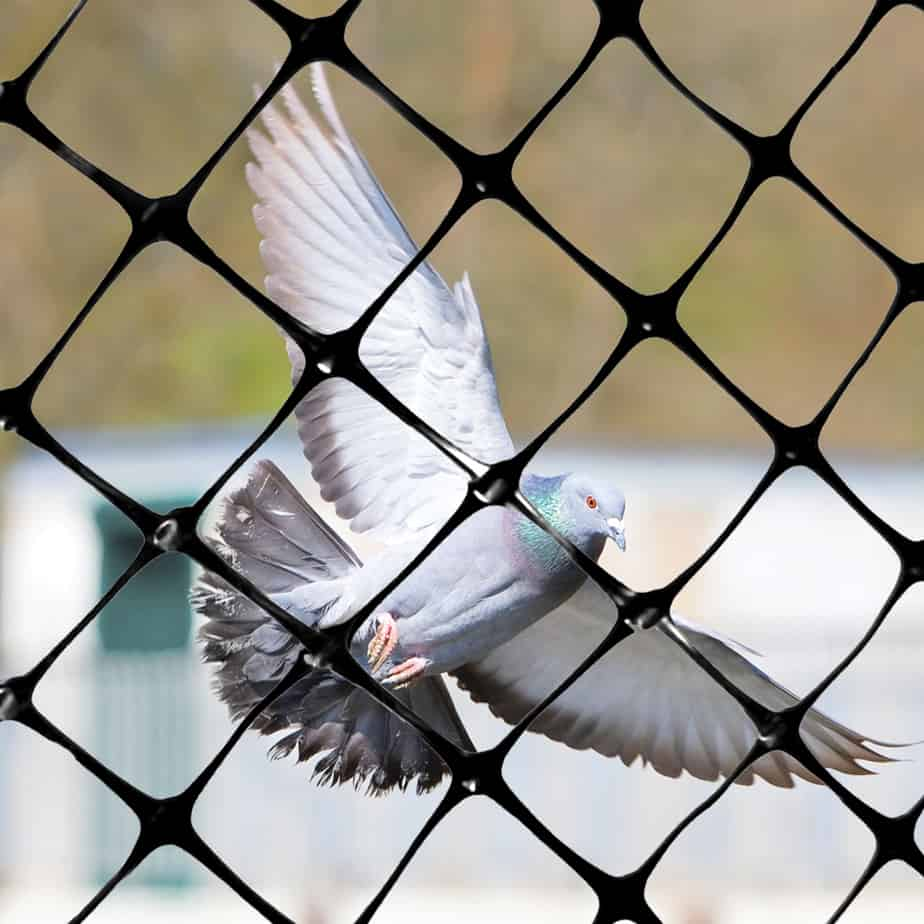 Bird-X - #1 - Heavy Duty Bird Net - Keeps Birds & Other Pests From Feeding, Roosting & Nesting