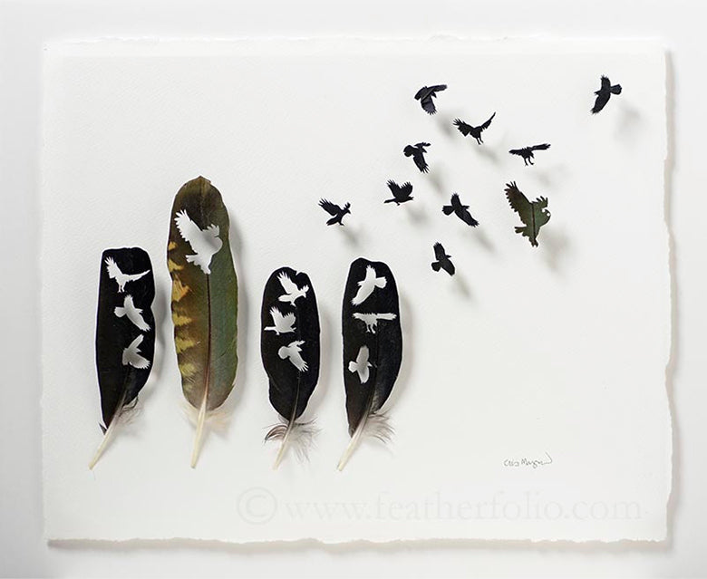 Crow feathers and kea feather