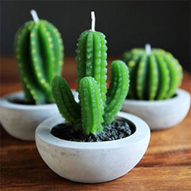 Cactus Candles from Rockett St George | The Magpie Files