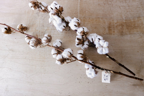 Dried Cotton Stalk (Seasonal)