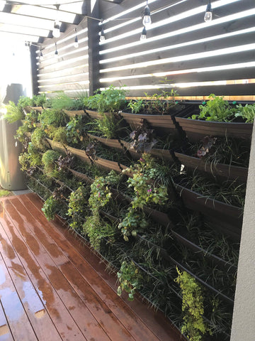 wallgarden diy vertical garden at home installed