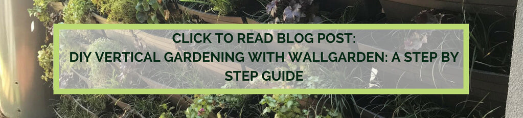 Vertical garden blog a step by step guide to building your own green wall
