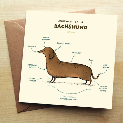 Anatomy Of A Dachshund SC01G Greetings Card by Sophie Corrigan